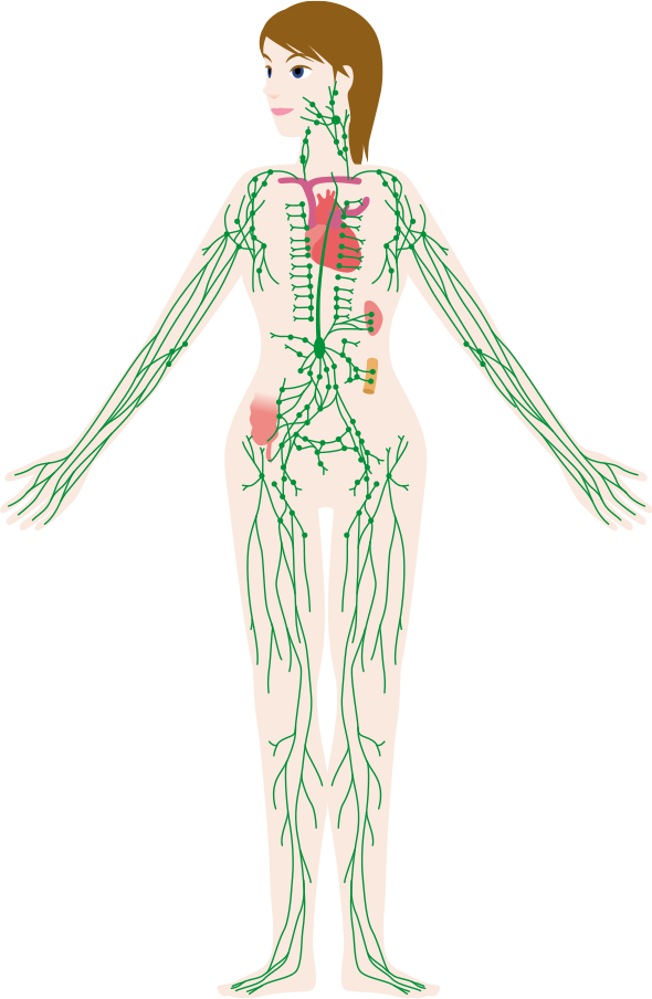 The Dr Vodder Manual Lymphatic Drainage (MLD) Technique